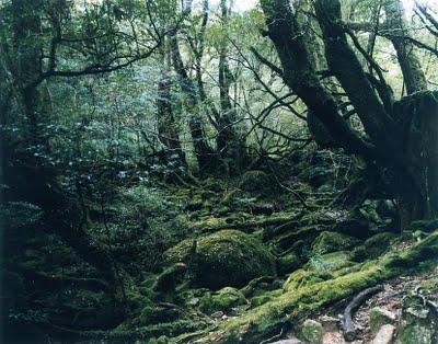 Thomas Struth Paradise